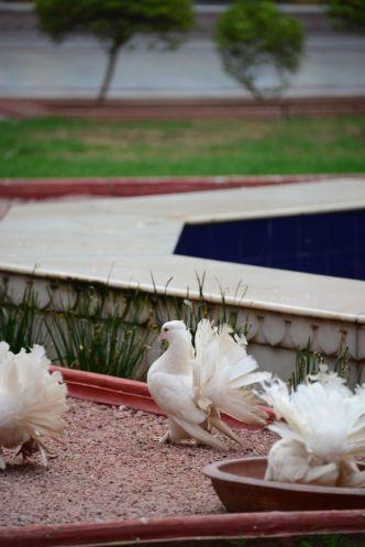 Laxmi Niwas Palace 1