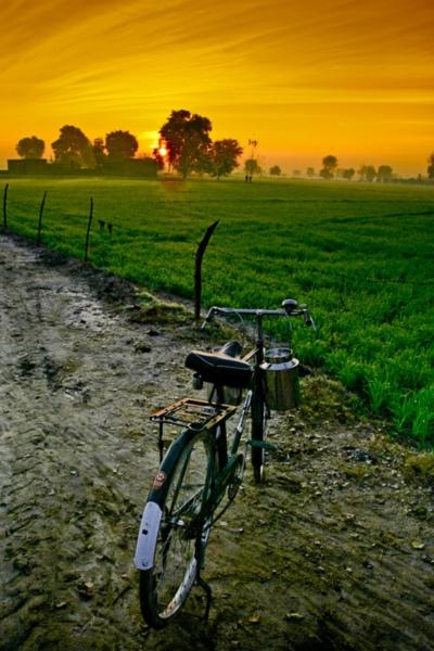 Punjab Culture