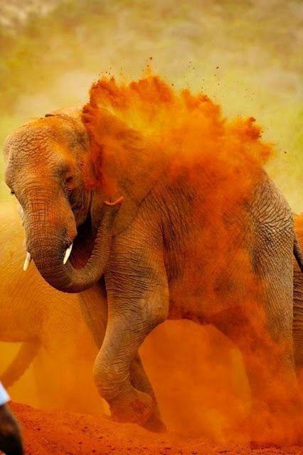 Royal Elephant Festival in Jaipur 2