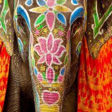 Royal Elephant Festival in Jaipur 3