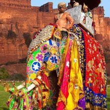 Royal Elephant Festival in Jaipur 4