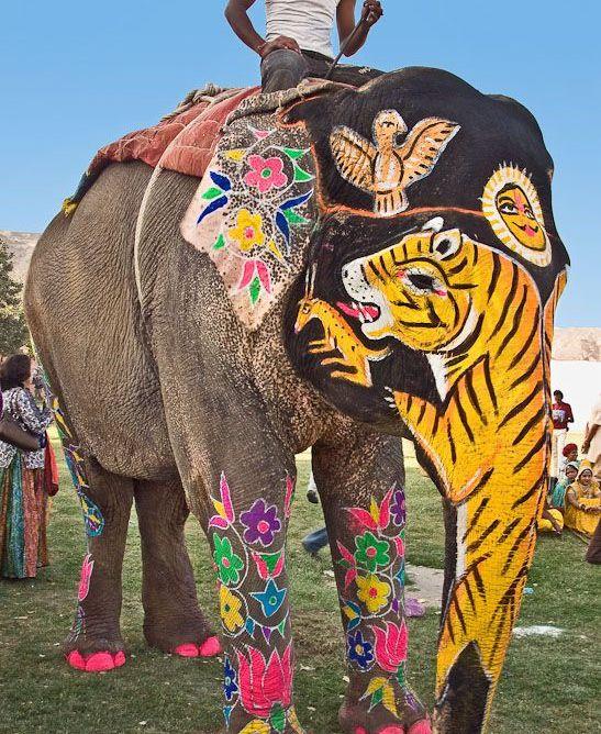 Royal Elephant Festival in Jaipur 5
