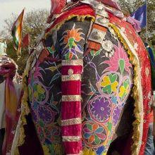 Royal Elephant Festival in Jaipur
