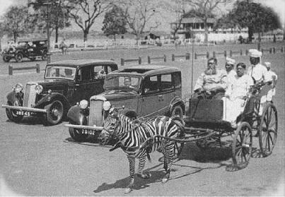 Zebra Cart